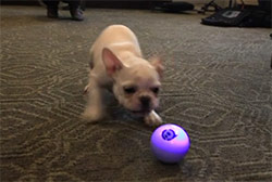 l'Application Sphero Pet